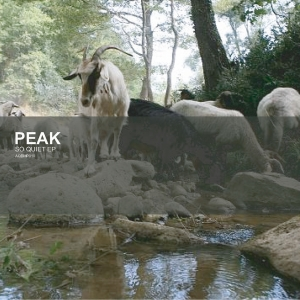 Aquietbump / Peak / So Quiet